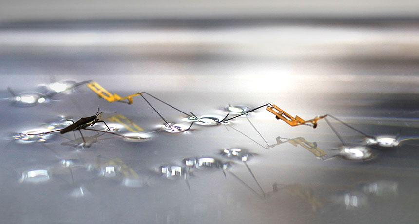 Water strider robot