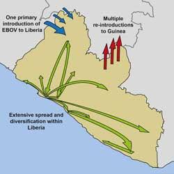 ebola spread in western africa