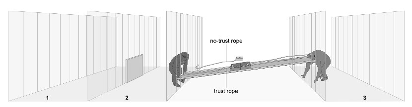 Research situation of chimps